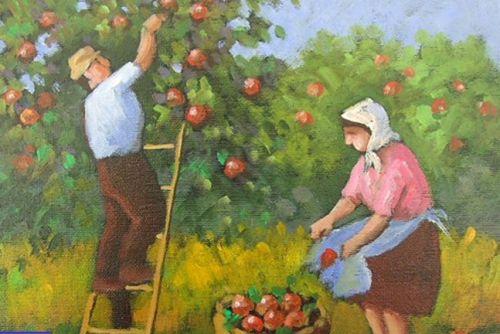 Immagine di repertorio - raccolta delle mele