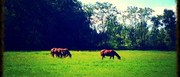 Cascina Vittoria - Parco La Mandria - cavalli nel prato