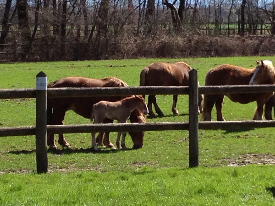 Pasquetta al parco con i cavalli e puledrini